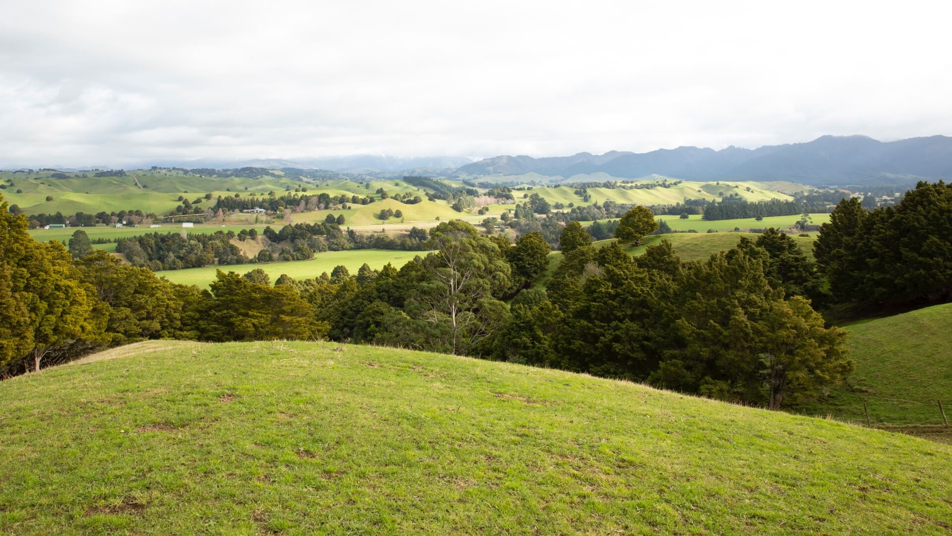 NZ Ag Scene