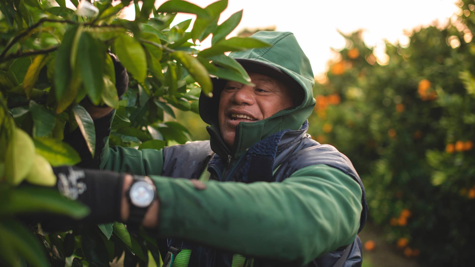 Our Immense Vulnerability To Seasonal Labour